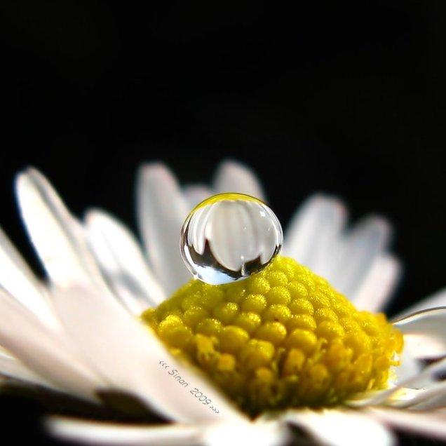 a_spring_tear_by_sinanTR