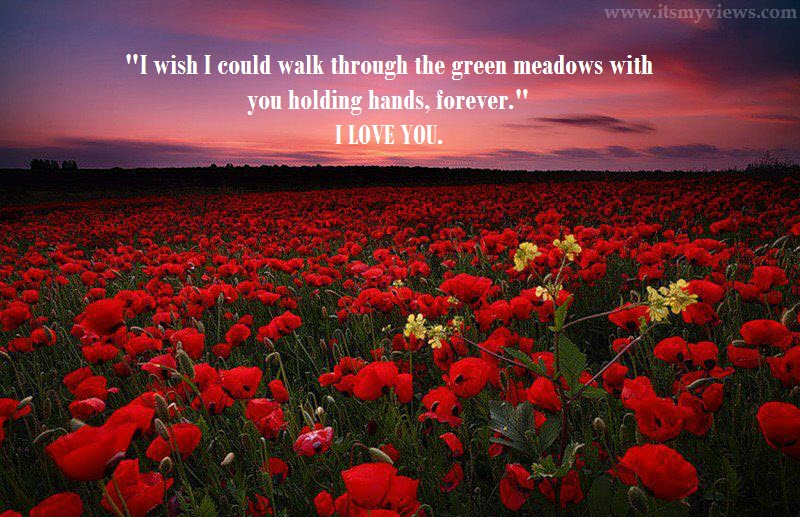 Beautiful Rose Flower Widescreen Wallpaper With Romantic Quote 2013 2014 Life With Catnip