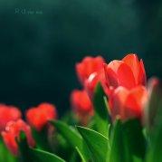 r_u_the_one_by_junjun510-d5z2xei