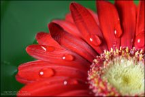 red-flower-macro2a