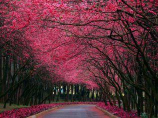 1379143920_pink_nature_hd_wallpaper