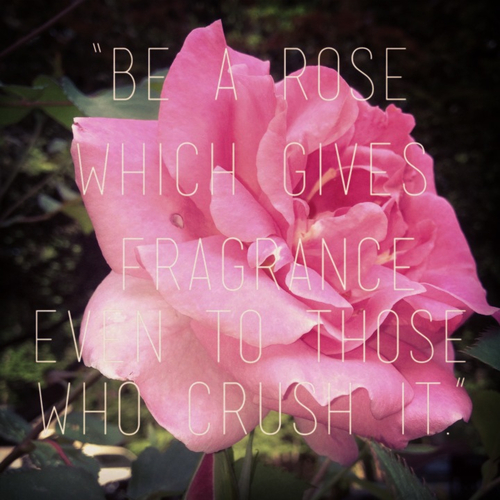 The gallery for --> Roses Background Tumblr With Quotes