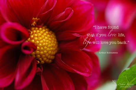big-red-flower-with-quote