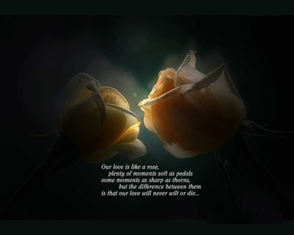 quotes-pictures-free-best-love-393287-740x592
