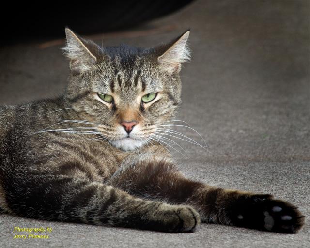 sonic cat repeller