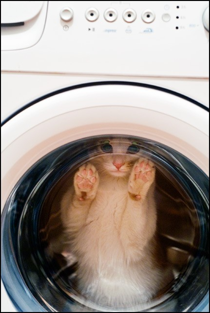 Cat_laundry_by_amazing_cat (1)