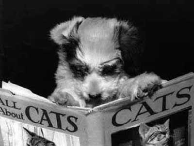 dog-reading-book
