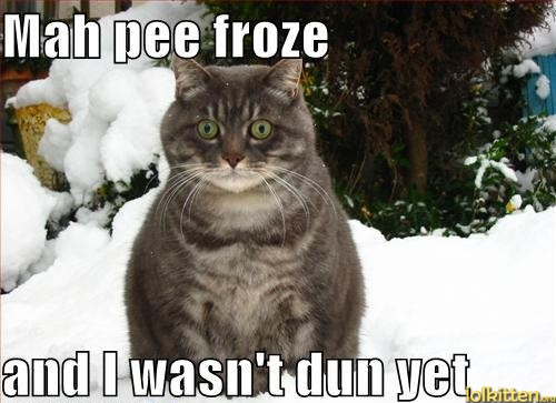 funny-cat-lolcat-winter-problems